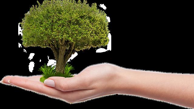 Baum pflanzen für Anfänger